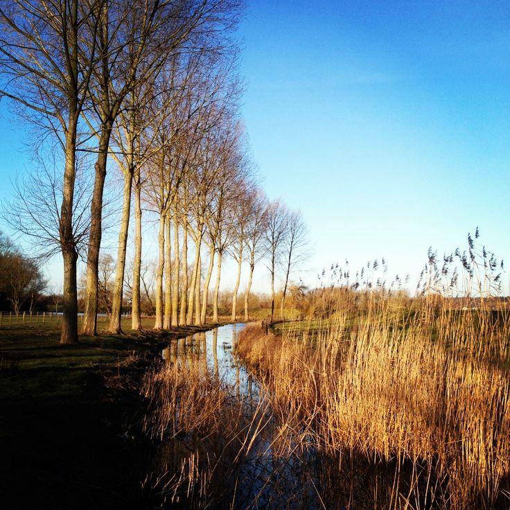 Nature at dawn (Maneswaard, Opheusden 1/28/2014)  by: E.R.P. Elschott (Avenue '86 - creative design workshop)  #maneswaard #opheusden #nature #landscape #uiterwaard #landschap #rivierland #betuwe #nederland #netherlands #avenue86 #photography #sunrise #dawn