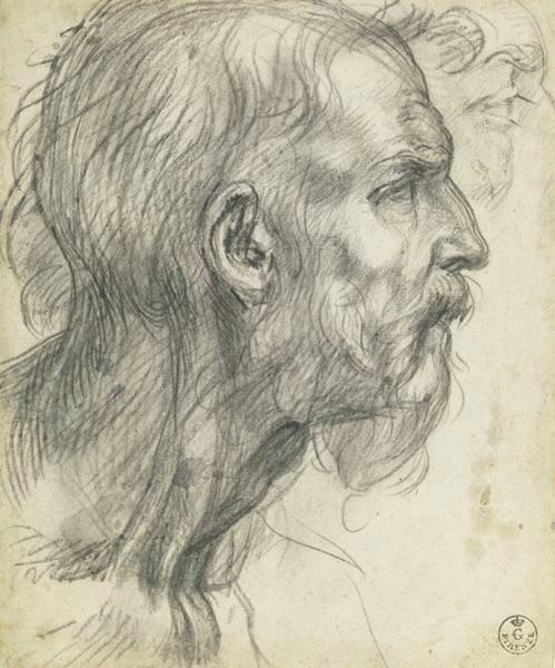 Andrea del Sarto - Studio di un uomo barbuto in profilo - ca. 1526–27 -  Galleria degli Uffizi, Gabinetto Disegni e Stampe, Florence