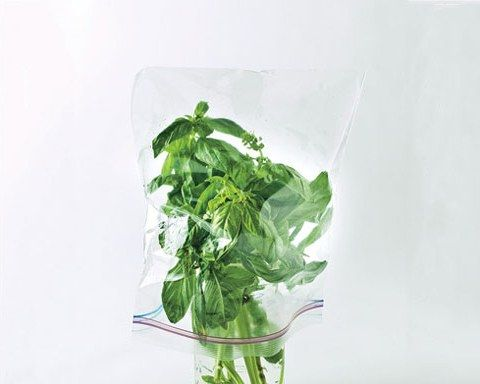 Our Best Trick for Storing Basil | Bon Appetit
