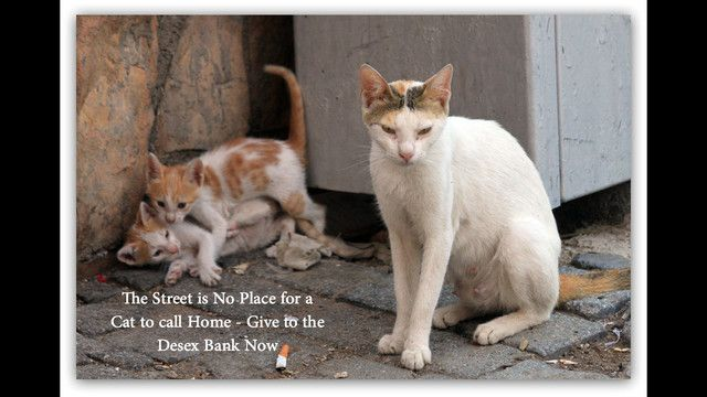 Desex Bank exists to reduce the number of homeless cats living on our streets. Your donation over $2 is tax deductible.