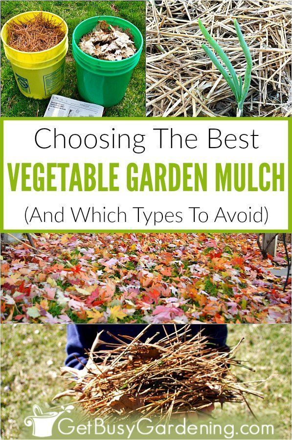 There Are Tons Of Different Types Of Mulches But Many Are For Landscapes And Not Good For A Vegetable Mulch For Vegetable Garden Types Of Mulch Garden Mulch