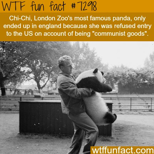 Chi-Chi the panda - WTF fun fact