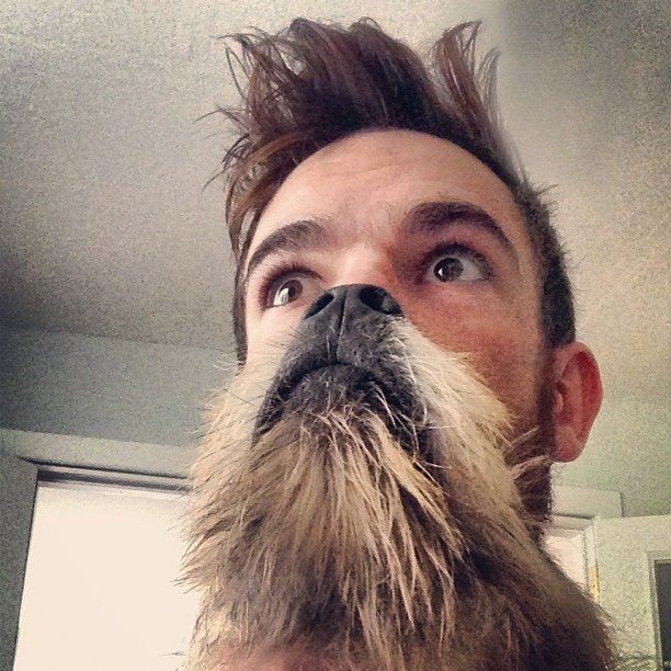Best Dog Beard!!! I wish Crow would let me do this! :(