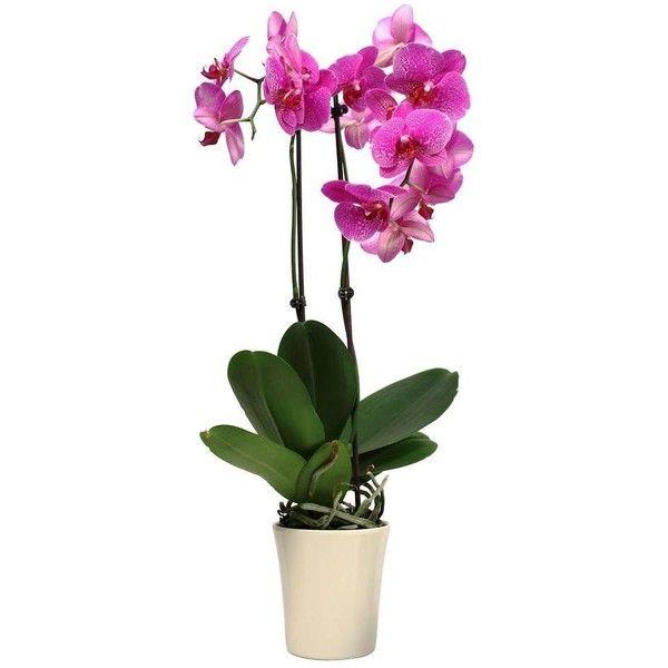 50 best Flora + Fauna images on Pinterest   Plants, Flora and Garden