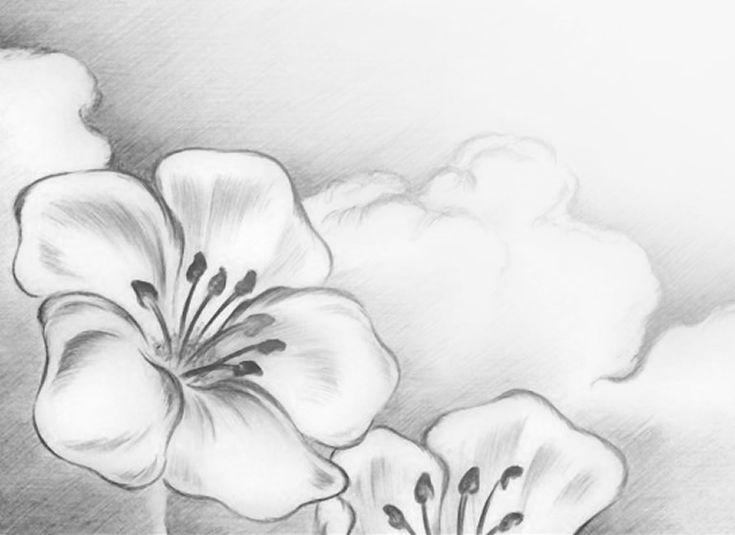 Como Dibujar Flores A Lapiz. Perfect Dibujos De Rosas Para