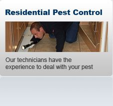 Pest Control London  Find a comprehensive service for all kinds of pest-control problems throughout London at an affordable price with The Pied Piper. We provide a professional, friendly, polite and reliable pest control service.