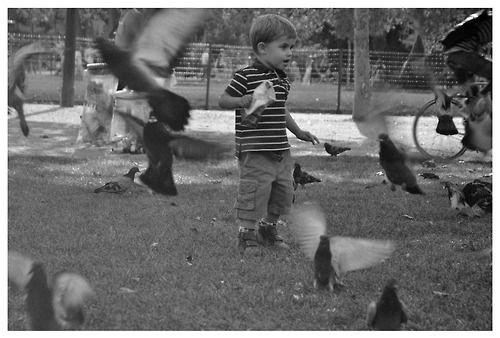 #child #paris #memories #summer #pigeon #romania