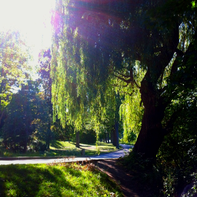Willow Trees at Springbank Park