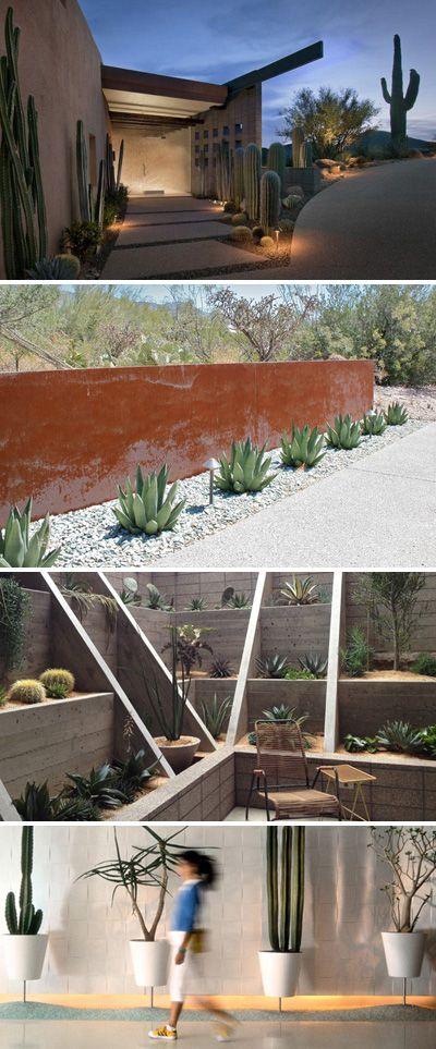Modernize Your Garden - Cactus Garden Ideas & Tips!