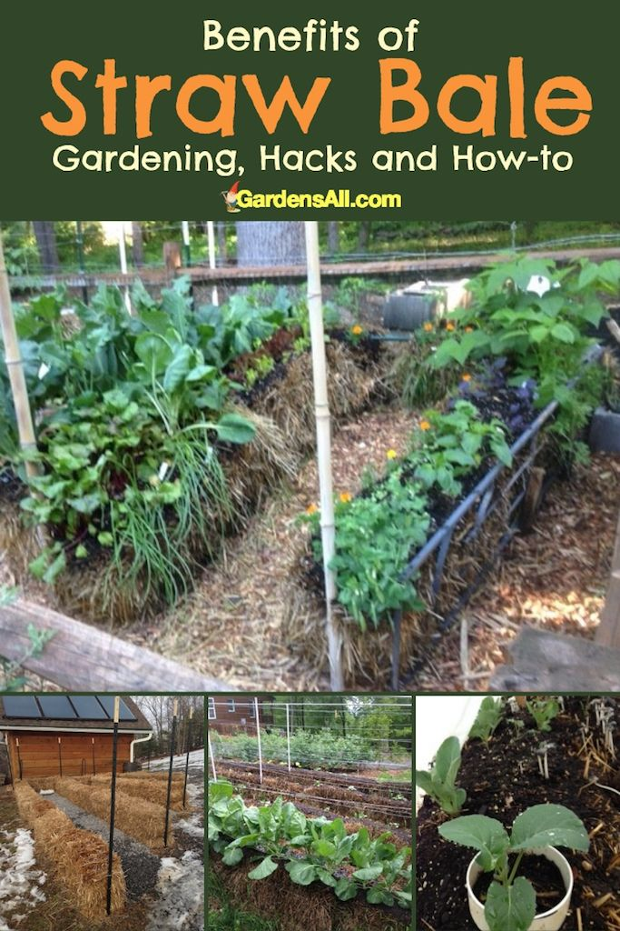 Benefits Of Straw Bale Gardening Hacks And How To Straw Bale Gardening Strawbale Gardening Organic Gardening Tips