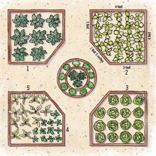 grow your own edible garden - Raised Bed Vegetable Garden Design