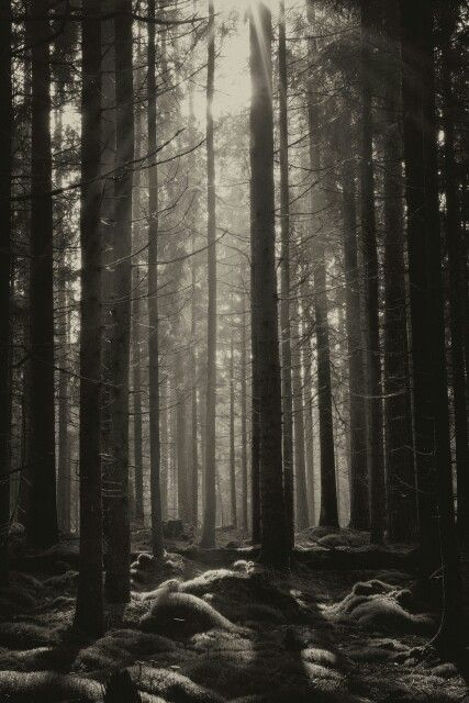 Forest, black and white
