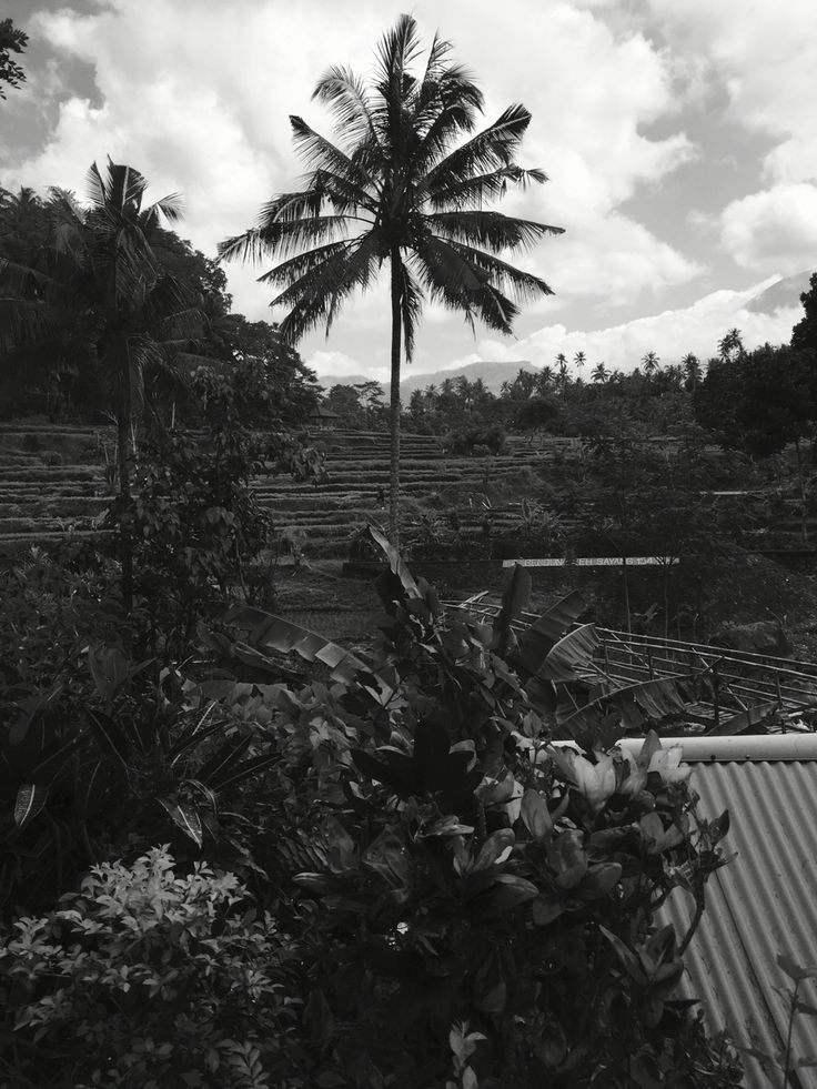 Bali holiday - rice paddies walk in 2
