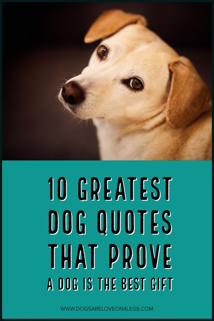 10 Greatest Dog Quote The Prove The A Dog Is The Greatest Gift, Dog, Dog Quotes