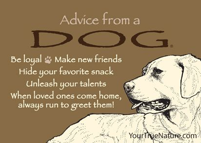 Advice from a Dog Jumbo Magnet