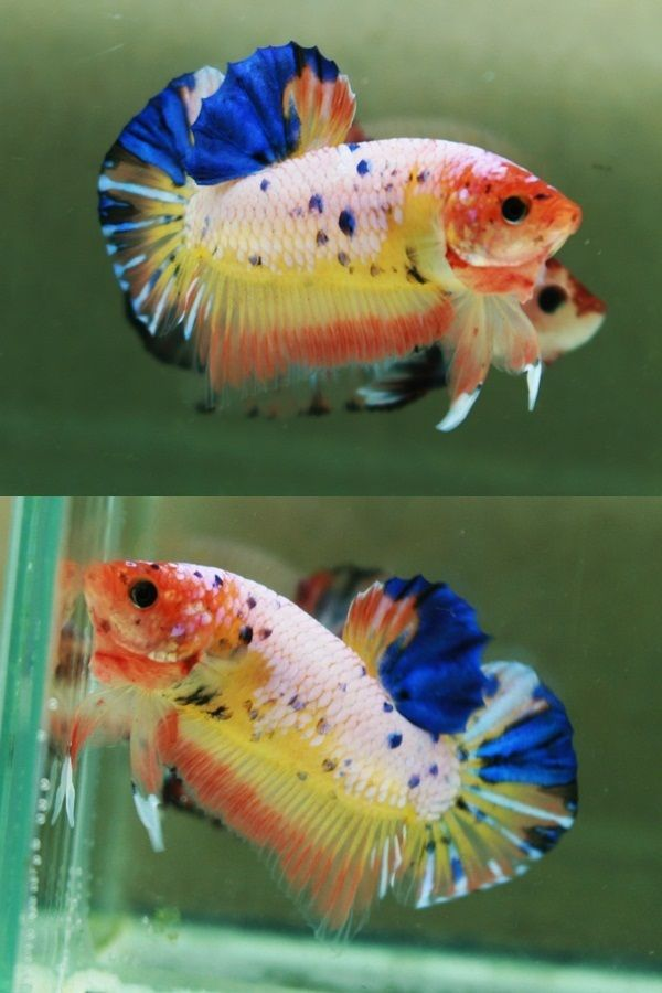 40 Best Images About Fish Named Finnigan On Pinterest