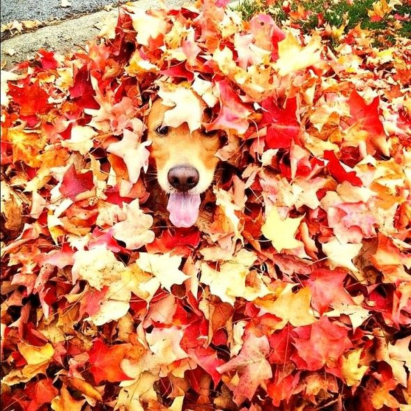 10.10.15 - Dogs Loving Autumn16