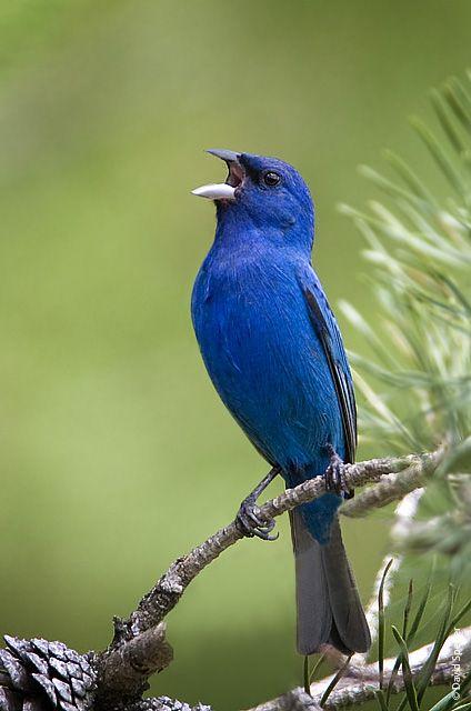 virginia bird photos - Bing Images