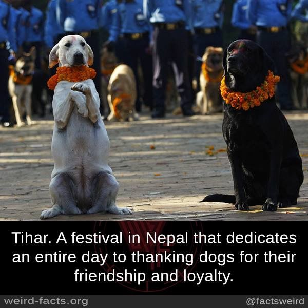 This is the right kind of festival for dogs.. not the dog eating one that's bloody disgusting!