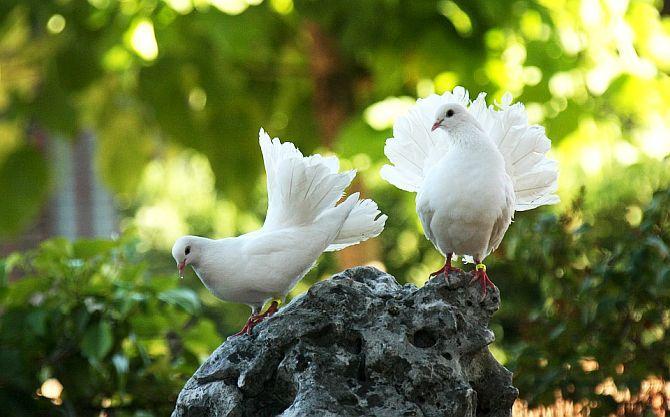 Dacă ai mereu inima curată, Dumnezeu te va auzi oriunde şi oricând - Sfântul Ioan Gură de Aur | La Taifas