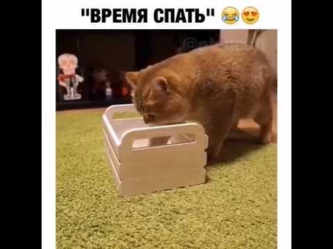 Спокойной ночи))