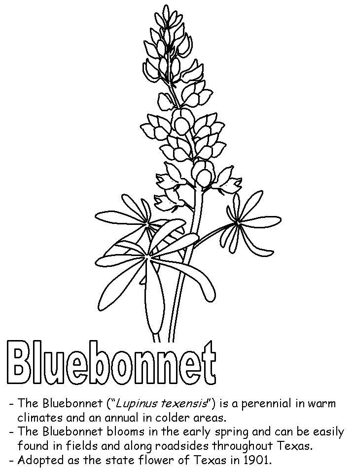 Pin By Linda Priddy On Printables Blue Bonnets Coloring Pages