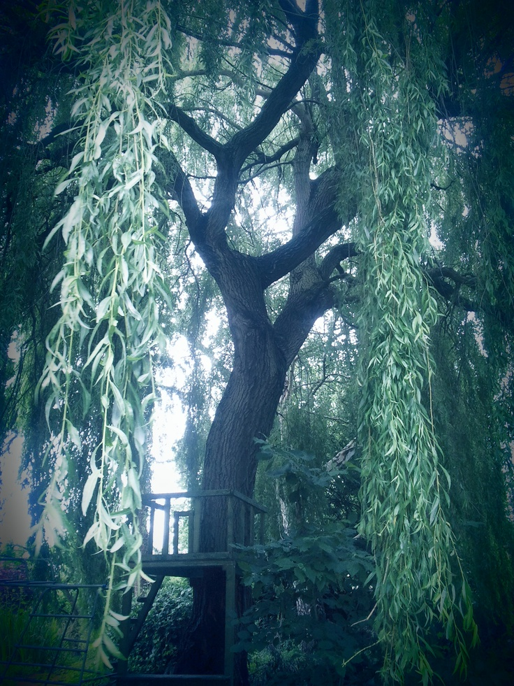 Weeping Willow Tree House: Built In, Backyard Trees