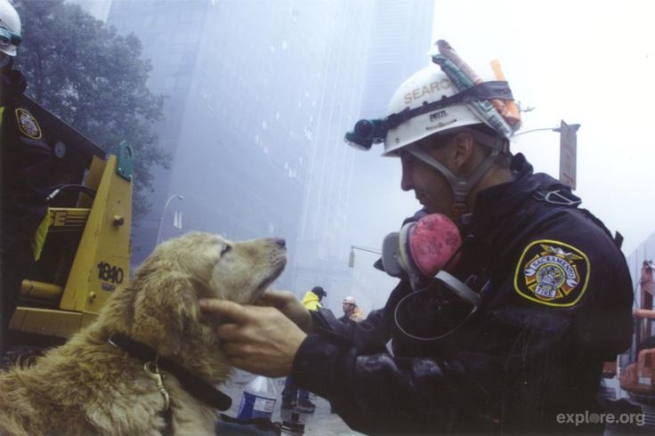 More than 300 search and rescue dogs and their handlers responded to ground zero after the 9/11 terrorist attacks.