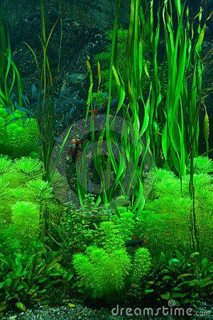 Alga marina verde