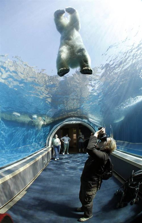 tunnel in the Pittsburgh Zoo that goes underneath polar bears and sharks. What happens if the glass breaks and the polar bears and shark meet? Who'd win that match?