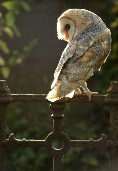 Owl on wrought iron gate
