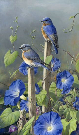 Morning Glorys n Bluebirds How Beautiful!! I don't think anything is prettier