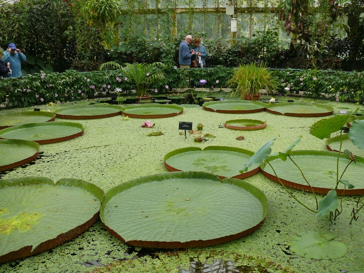 20 best images about pond life on pinterest raising for Garden pond life