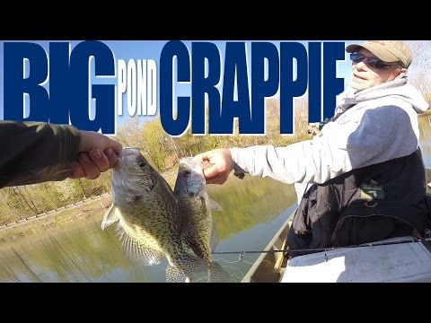 How to Catch Crappie in Ponds - YouTube