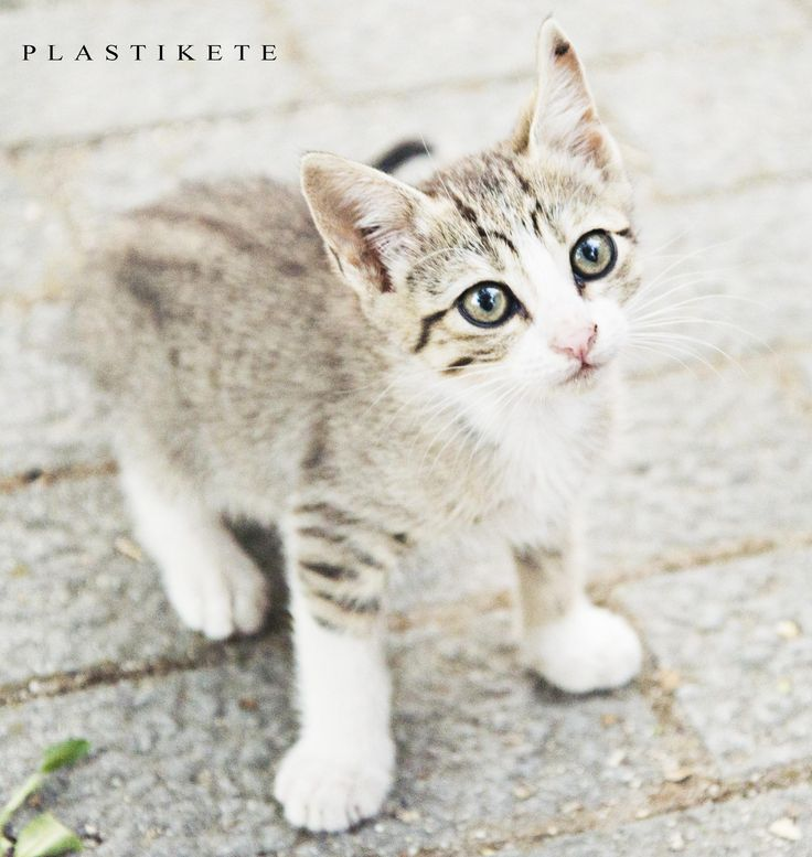 kitty cat by Plastikete  on 500px
