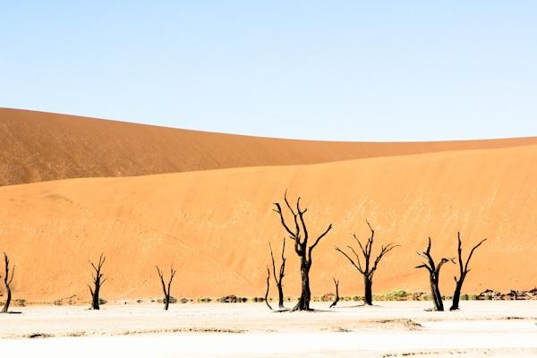 The Deadvlei salt pan in Namibia - http://www.ventureso.me/namibia/ -#namibia #dunes #deadvlei #africa #tourism #travel