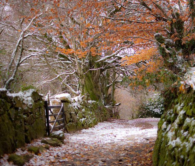 Belstone Lane, Dartmoor, Devon | Flickr - Photo Sharing!