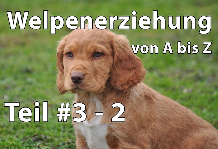 Welpenerziehung Teil #3 - 2 | Welpenerziehung von A bis Z