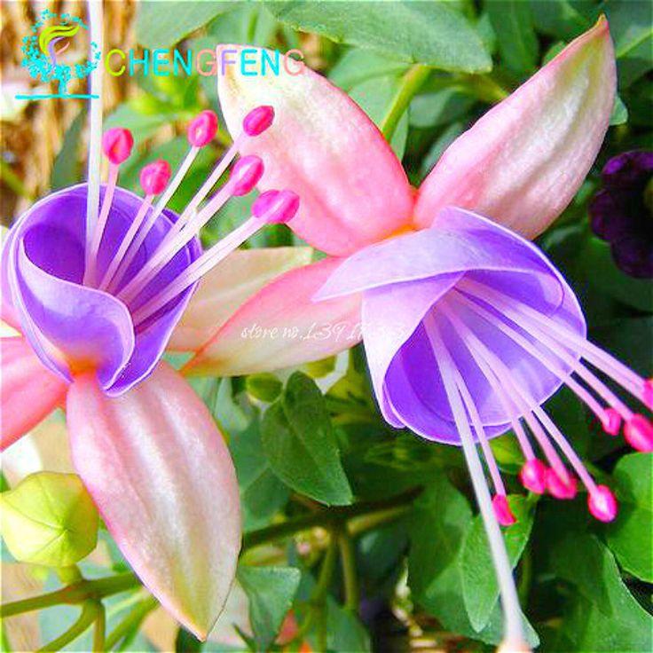 200 шт. фонарь цветок фуксия семена висит цветы F. Alba coccinnea DIY посадки цветов DIY завод цветок растение бонсай Semente