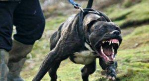 Οι δέκα πιο επικίνδυνες ράτσες σκύλων στον κόσμο [Βίντεο]
