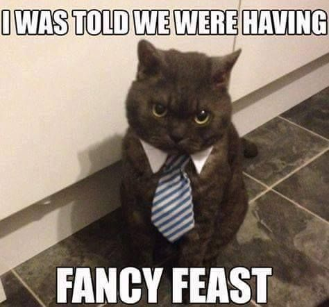 Fancy Feast Cat