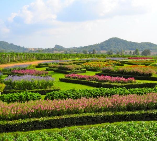The garden at Silverlake Wine Vineyard in Thailand.