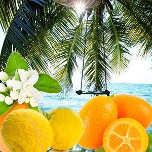 Palm Island Fragrance Oil