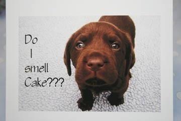 Chocolate Lab Do I Smell Cake Funny Birthday Card