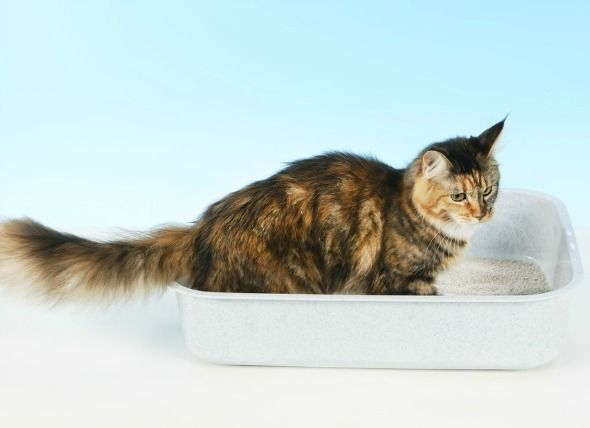 Best Cat Litter For Urinary Tract Infections