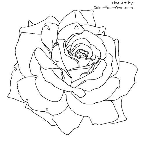 Flower Coloring Pages for Adults | ... tweet coloring pages blog newest additions main coloring page index
