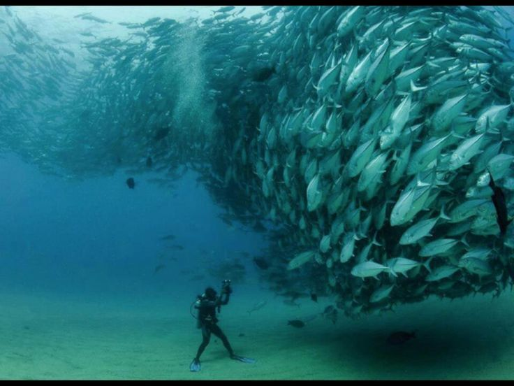 Class Photo of a School of Fishes