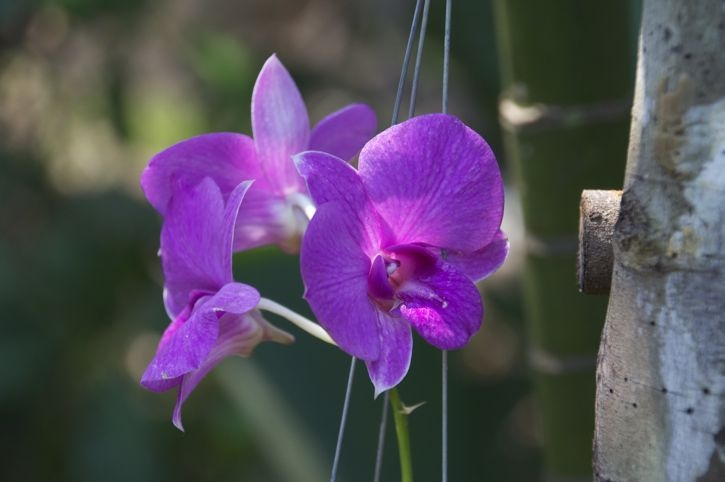 Butterfly Sanctuary Orchids – Siem Reap, Cambodia
