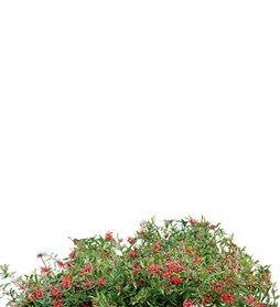 Specimen Planting