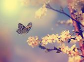 Vintage butterfly with flowers — Stock Photo